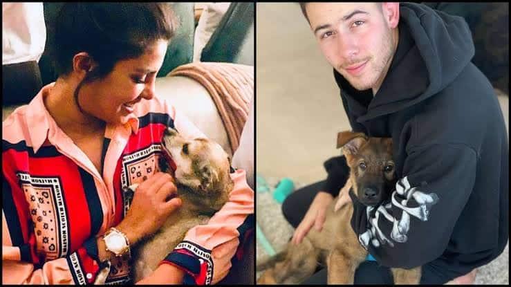 Nick Jonas Reveals Why Wifey Priyanka Chopra Is Upset With Their New Pup Gino
