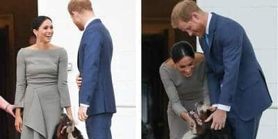 Meghan Markle And Prince Harry Adopt A Labrador Dog