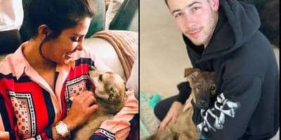Nick Jonas Reveals Why Wifey Priyanka Chopra Is Upset With Their New Pup Gino