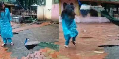 Digangana Suryavanshi Seen Being Attacked By A Peacock In Viral Video, Her Mother Thinks The Bird Was Trying To Hug Her